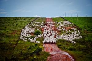 Rebanho de gado
