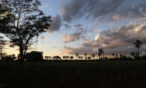 Barriguda do Eurico, Umburanas - Bahia