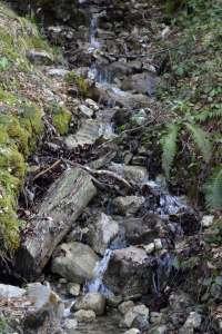 Quellwasser am Karren, Dornbirn