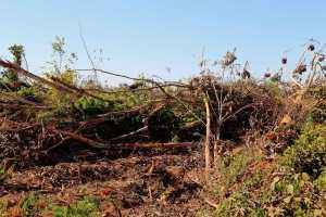 desmatamento_linha-8,-segundo-para-o-primeiro-eixo,-distrito-Nova-Estrela_1