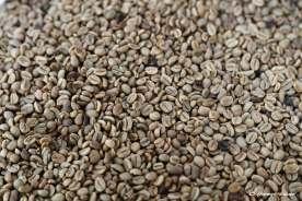 2_café-descascado-pronto-para-torrar