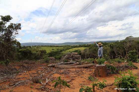 desmatamento-para-as-linhas-de-transmissão-de-energia_1